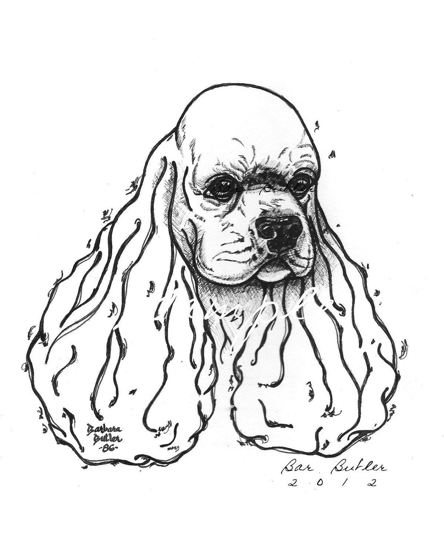 1200x1500 Cocker Spaniel Original Ink Drawing Head Study Show Quality