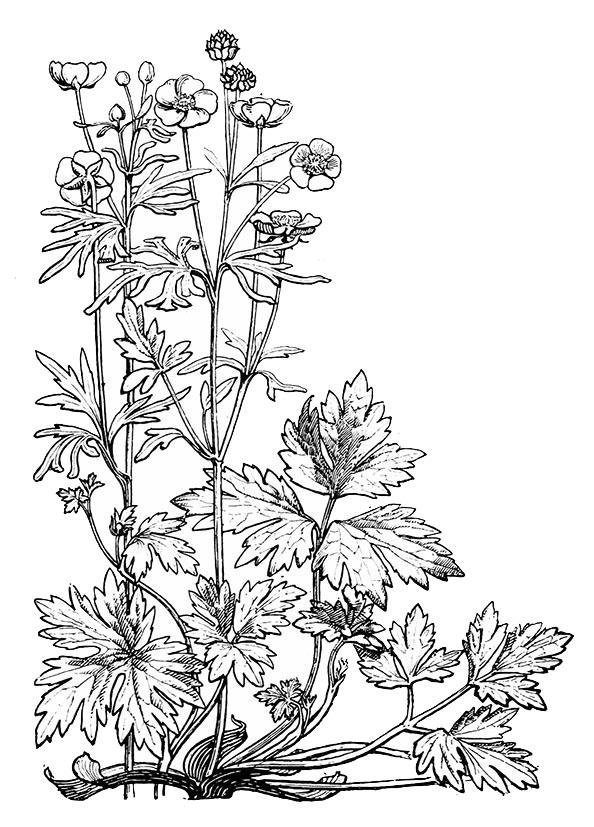 594x827 Flower Sketches
