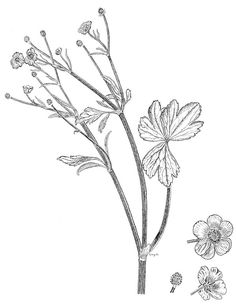 236x306 Image Result For Buttercup Drawing Voley Buttercup