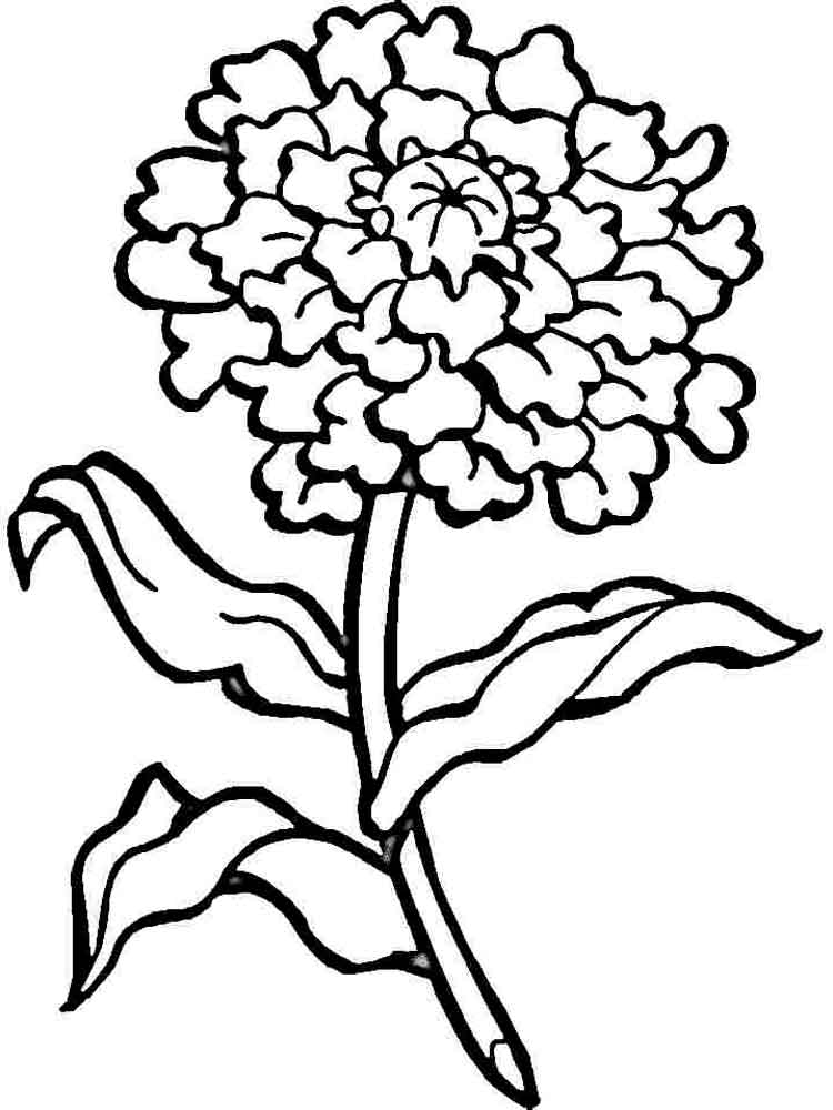 750x1000 Carnation Coloring Page Carnation Coloring Book Pages