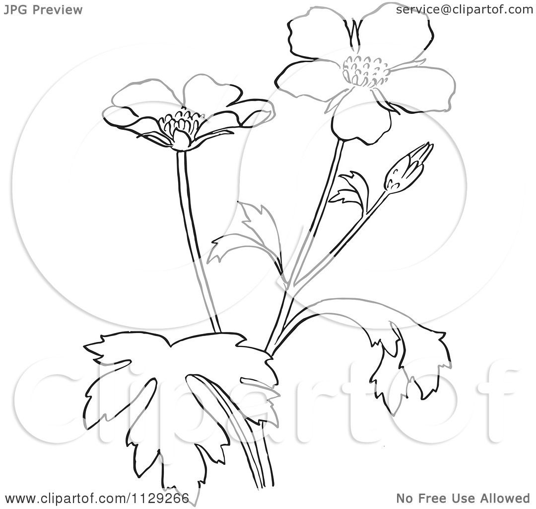 1080x1024 Cartoon Clipart Of An Outlined Buttercup Flower Plant