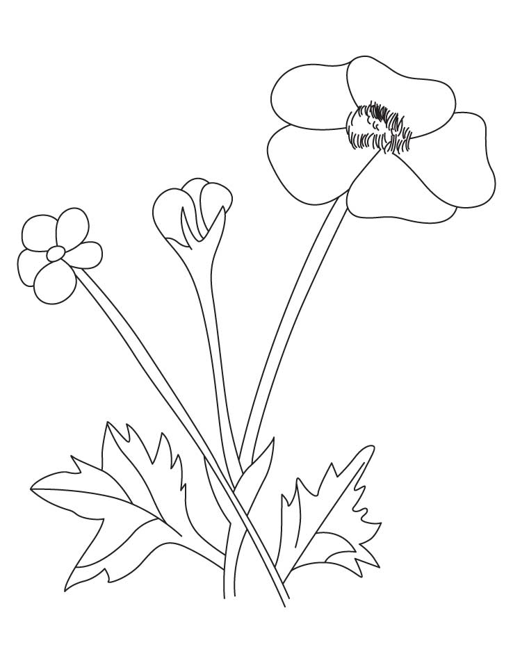 738x954 Buttercup Coloring Pages