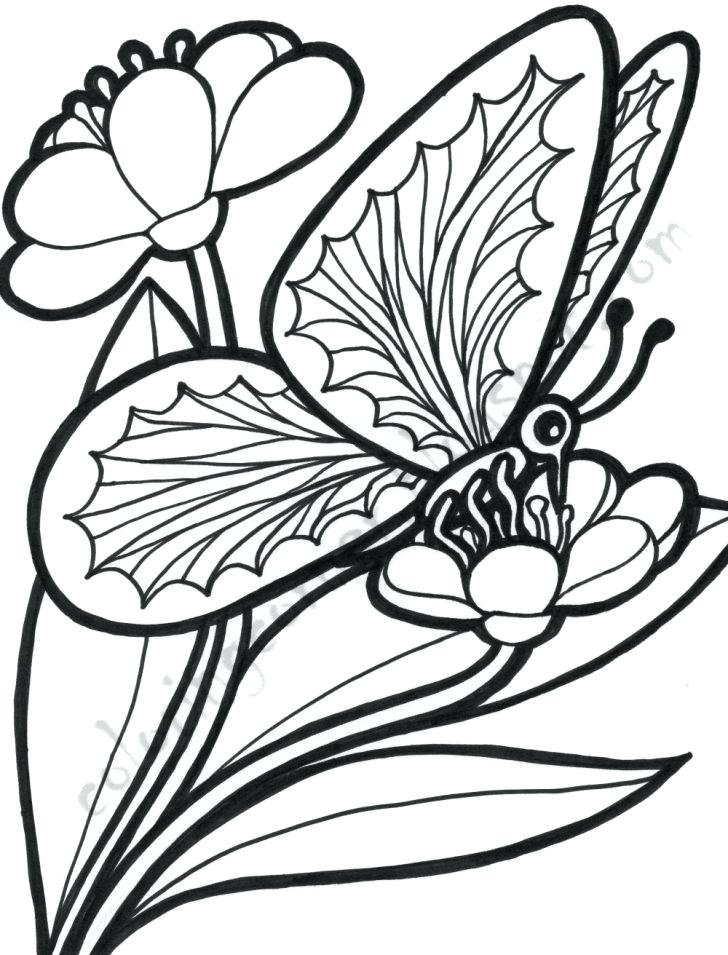 728x955 free coloring pages flowers and butterflies flowers and - Coloring Page Of Butterfly