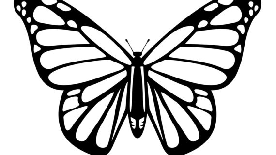 butterflies drawing at getdrawings com free for personal use