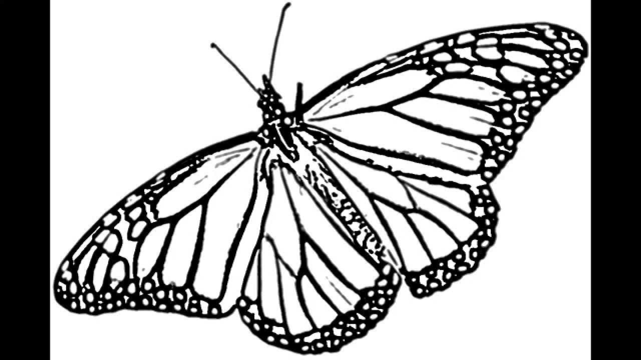 1280x720 Monarch Butterfly Line Drawing Butterfly Monarch 2d How To Sketch