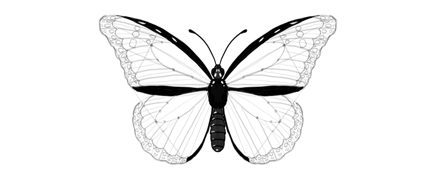 850x346 How To Draw A Butterfly Step By Step