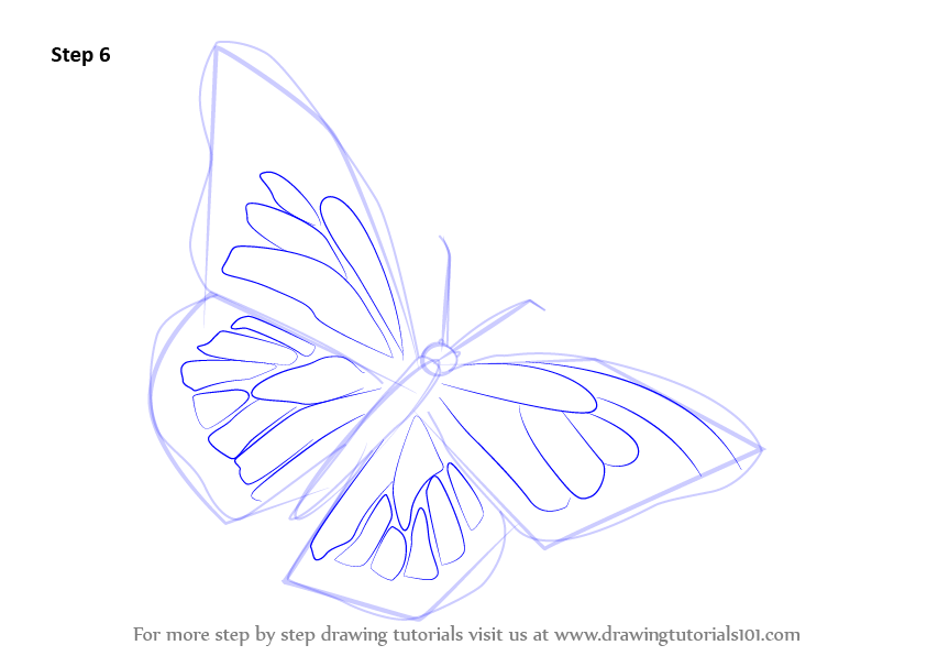 843x596 Learn How To Draw A Monarch Butterfly (Butterflies) Step By Step