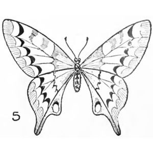300x300 Balance, Symmetricalformal Butterfly Drawing Easy Methods How