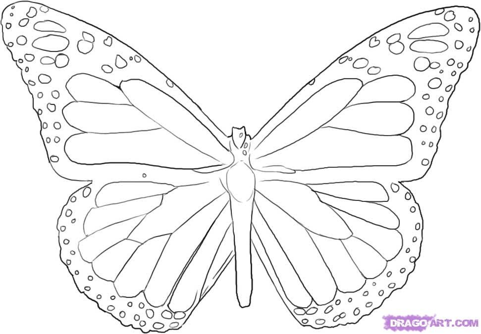 971x675 Steps To Draw A Butterfly How To Draw A Butterfly, Step By Step