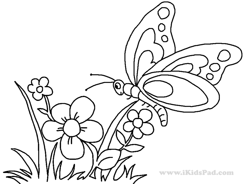 1024x768 Butterfly And Flower Drawing For Kids