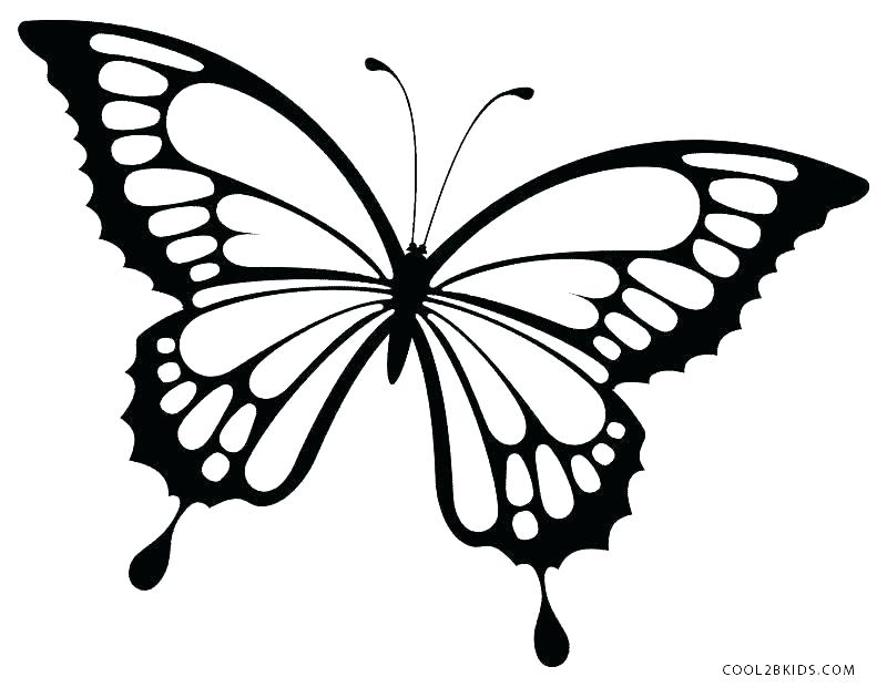 800x620 Coloring Page Of Butterfly Coloring Pages Of Butterflies To Print