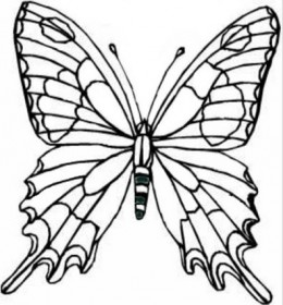 260x280 Wild Animals Kids Coloring Pages Free Colouring Pictures To Print