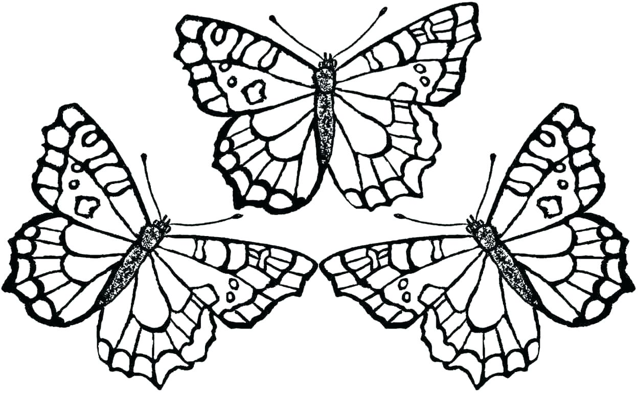 1250x769 Coloring Coloring Pages Flowers And Butterflies