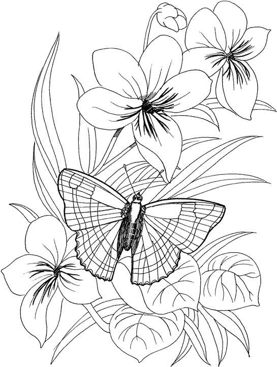 Butterfly And Flower Drawing