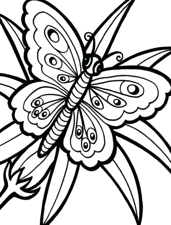 600x787 Cute Butterfly Coloring Pages Butterfly Flower Coloring Pages Cute
