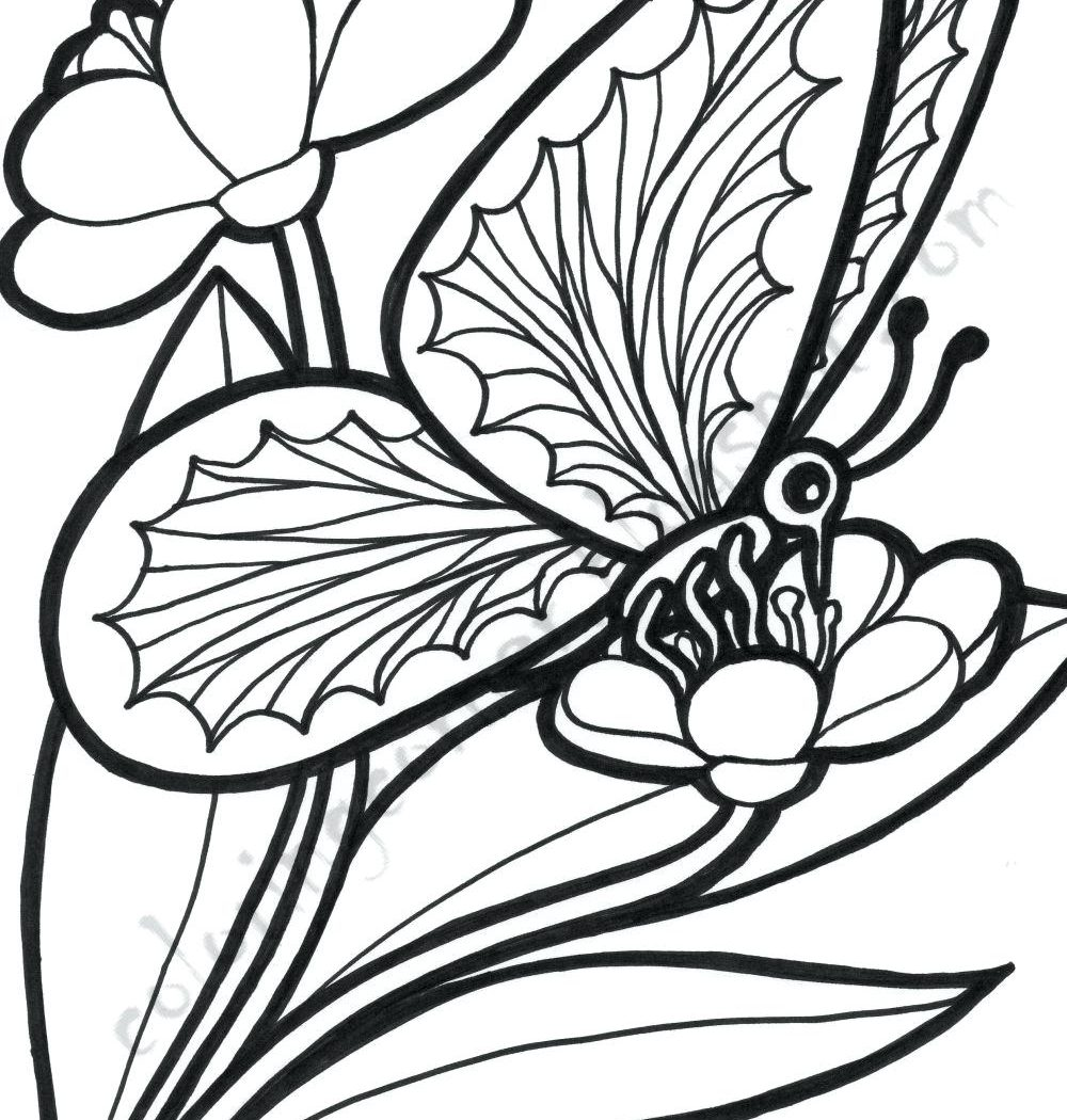 1000x1050 Free Printable Coloring Pages Of Butterflies And Flowers
