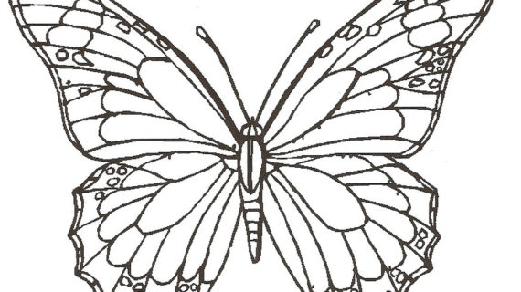 570x320 A Drawing Of A Butterfly How To Draw A Flower Step By Step About
