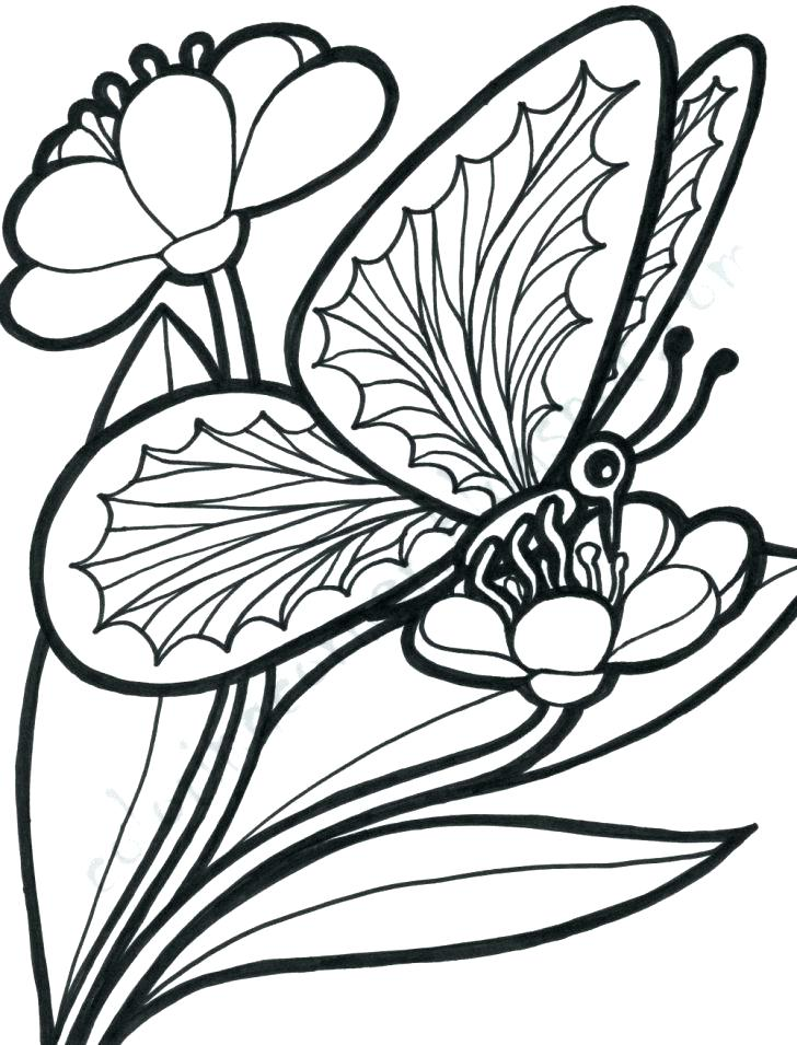 728x955 New Butterfly And Flower Coloring Pages For Free Coloring Pages