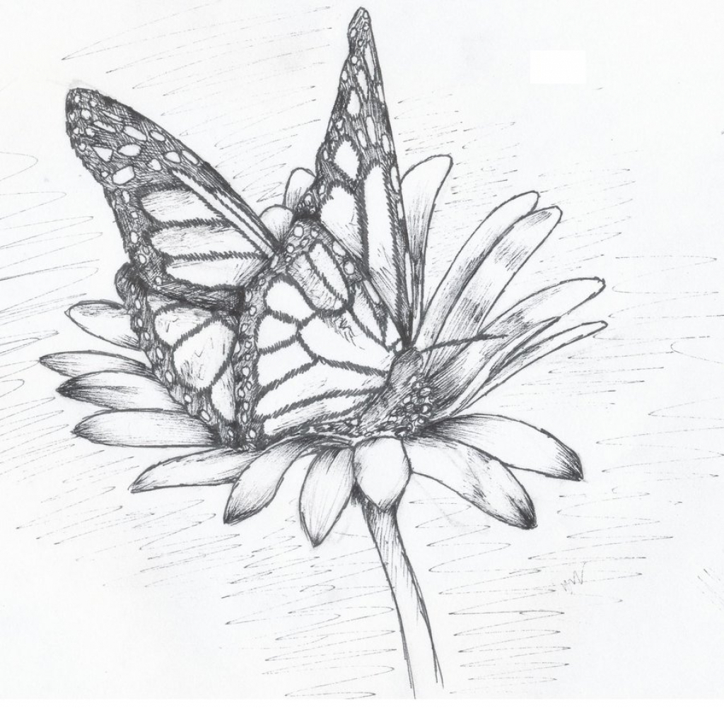 1024x1002 Butterflies On Flower Sketch How To Draw A Butterfly Sucking