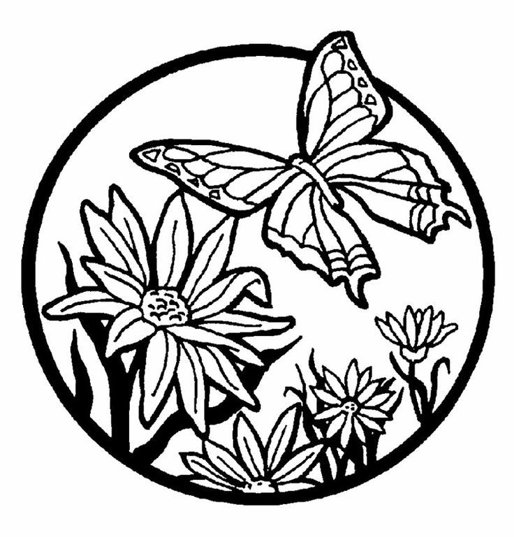 736x769 Butterfly And Flower Coloring Pages For Kids