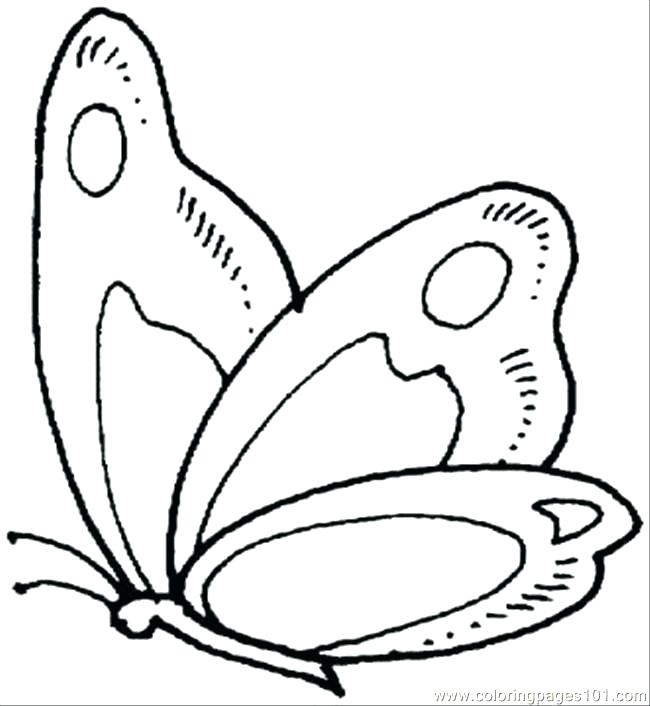 650x706 Coloring Page Of A Butterfly Synthesis.site