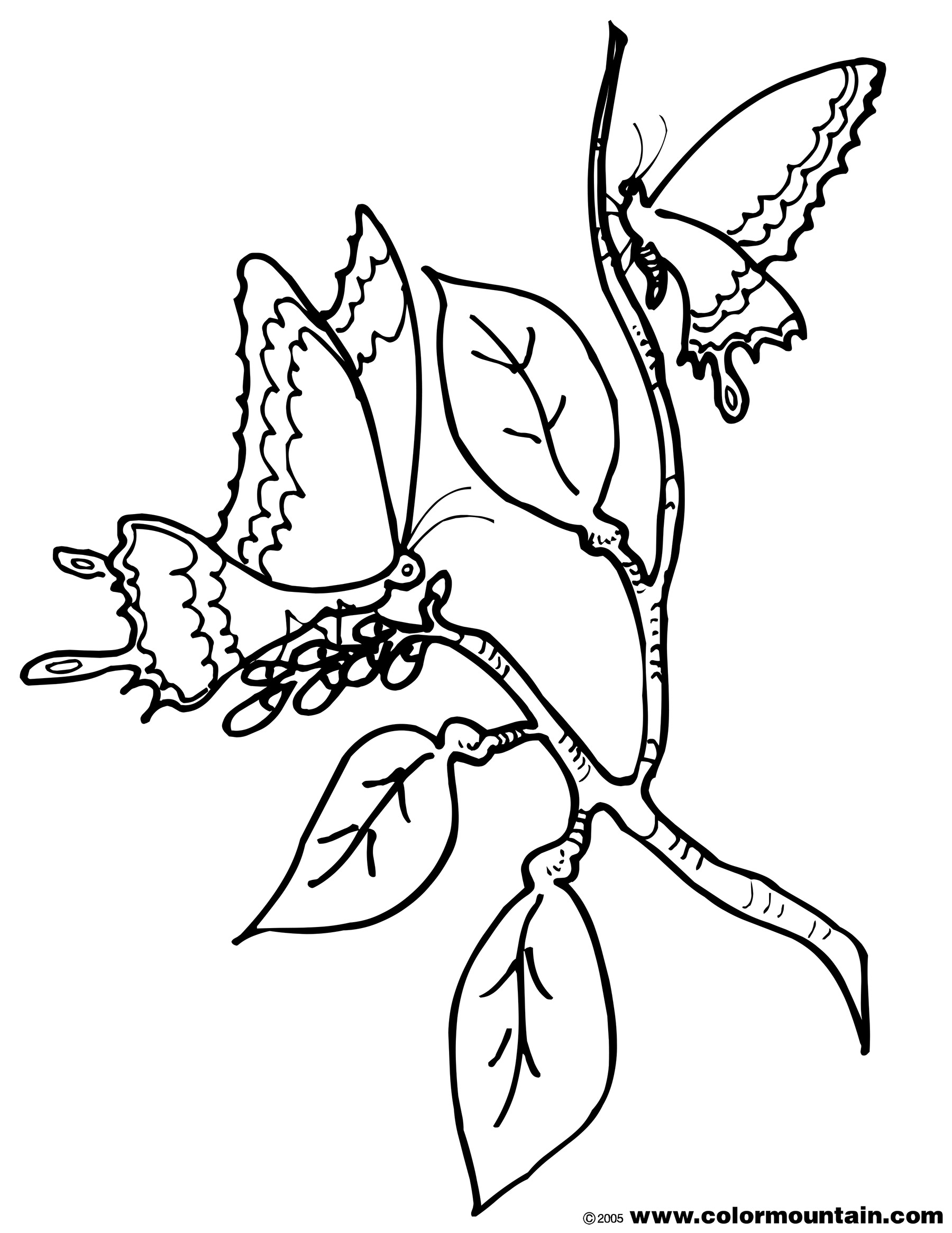 1800x2329 Cocoon Printable Coloring Page