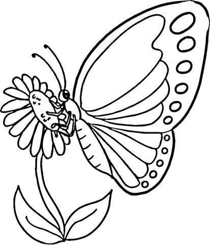 413x480 Coloring Monarch Butterfly Caterpillar Coloring Page