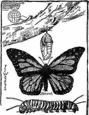 308x400 The Best Butterfly Cocoon Ideas On Butterfly