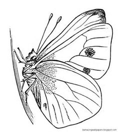 236x263 Butterfly Clipart Butterfly Cocoon