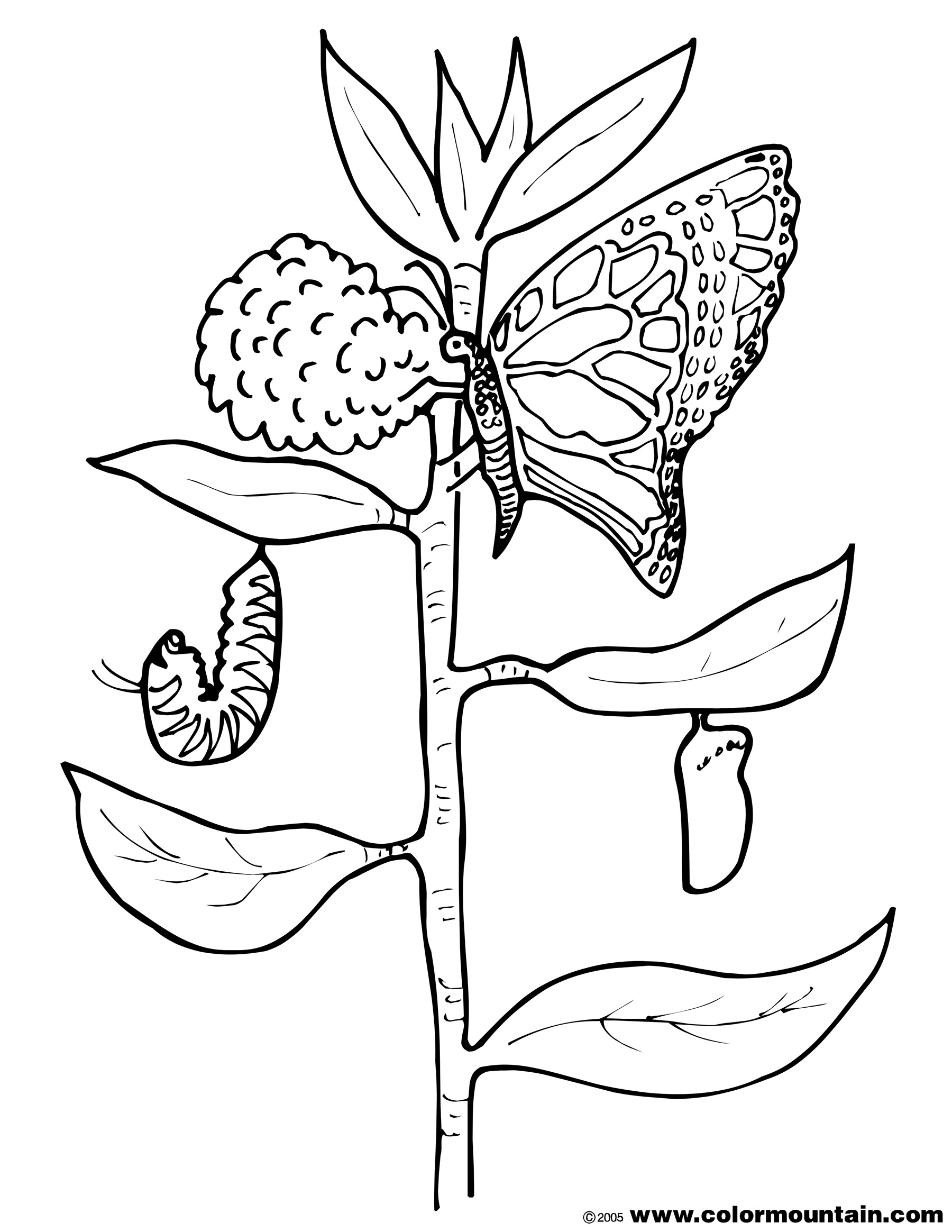 butterfly chrysalis coloring pages - photo#15
