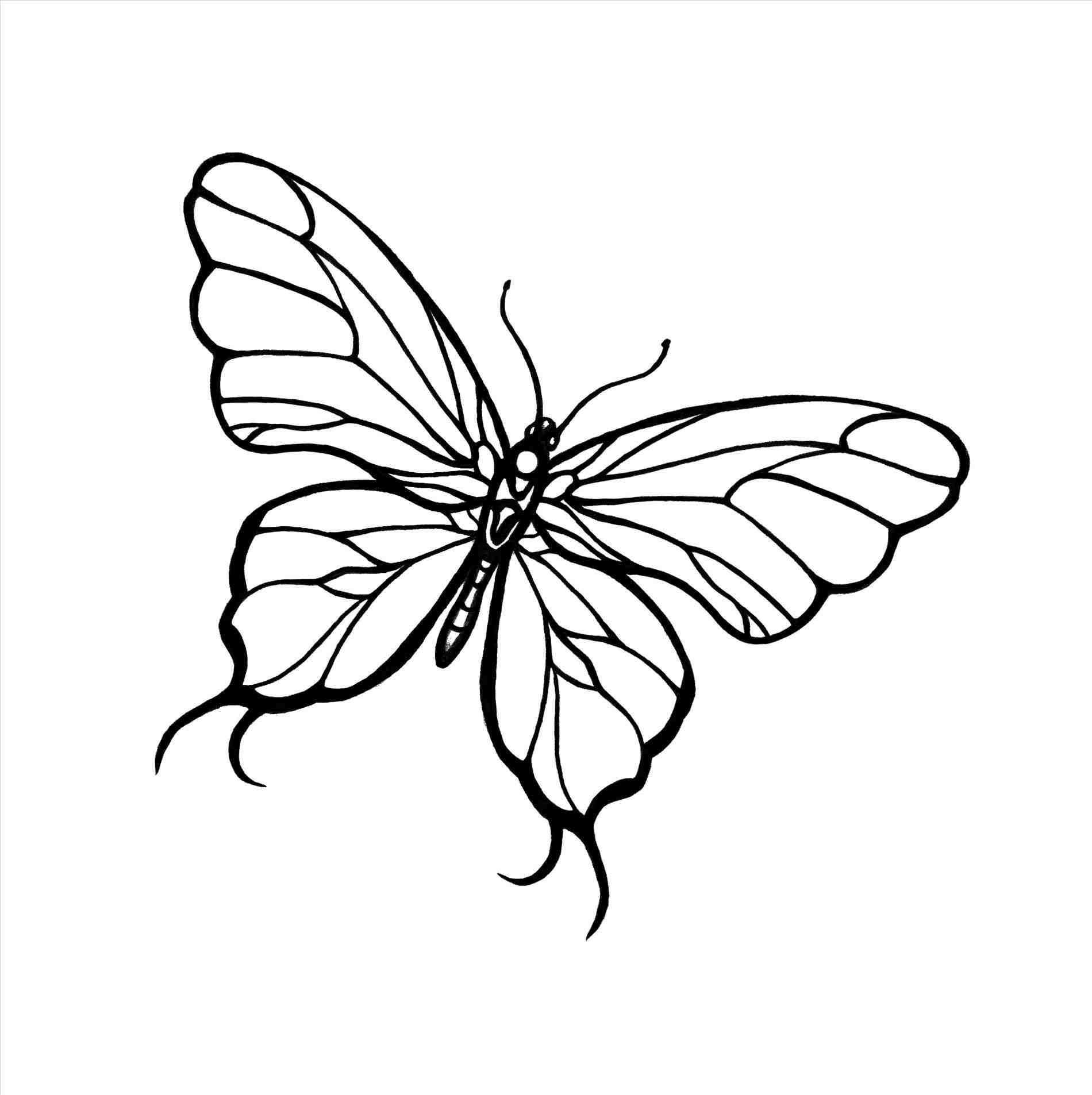 1900x1906 Cool Butterfly Drawings Drawing A Cool Tribal Butterfly Tattoo