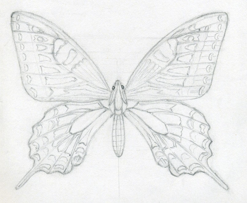 805x660 How To Draw A Butterfly Surprisingly Easy