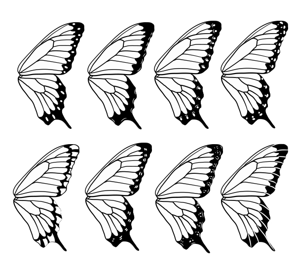 600x551 How To Draw Animals Butterflies, Their Anatomy And Wing Patterns