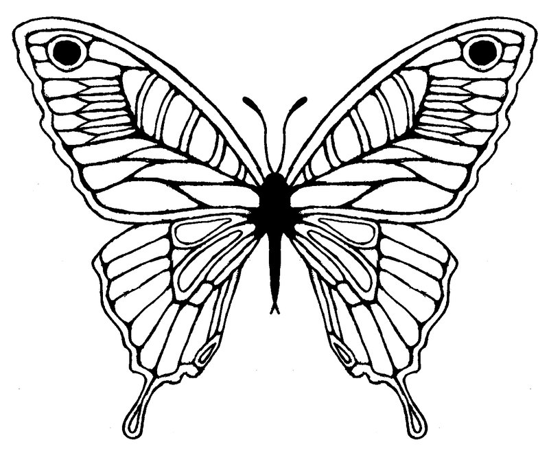 800x660 Butterfly Sketch Tattoo Design