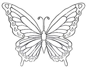 300x236 Free Butterfly Coloring Pages Kid Crafts