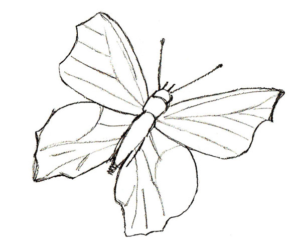 600x500 How To Draw A Butterfly