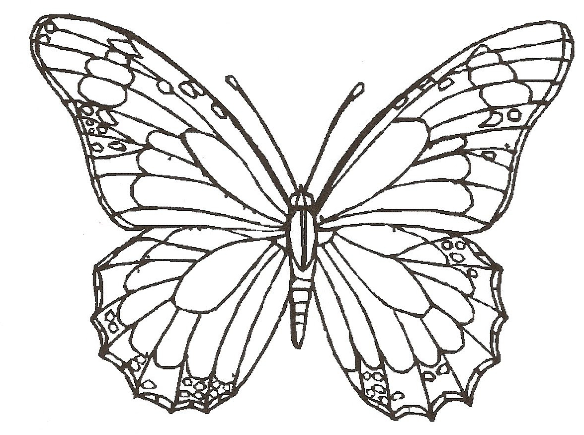 1175x875 Butterfly And Flower Drawing Colour How To Draw Butterfly, Rose