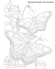 Butterfly Drawing Color