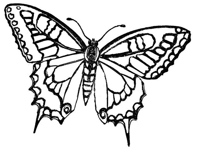 Butterfly Drawing Ideas