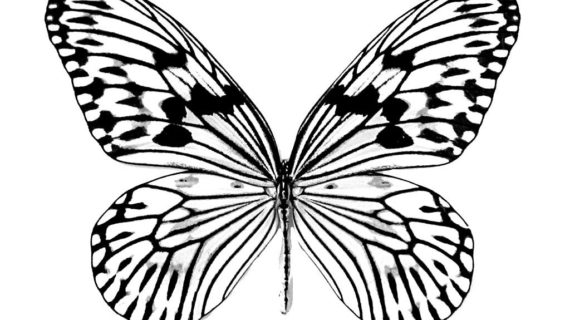 570x320 Drawings Of Butterflies 18 Butterfly Drawings Art Ideas Design