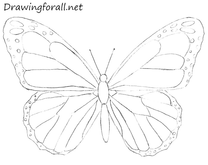 700x556 Beautiful Butterfly Drawing Ideas For Kids