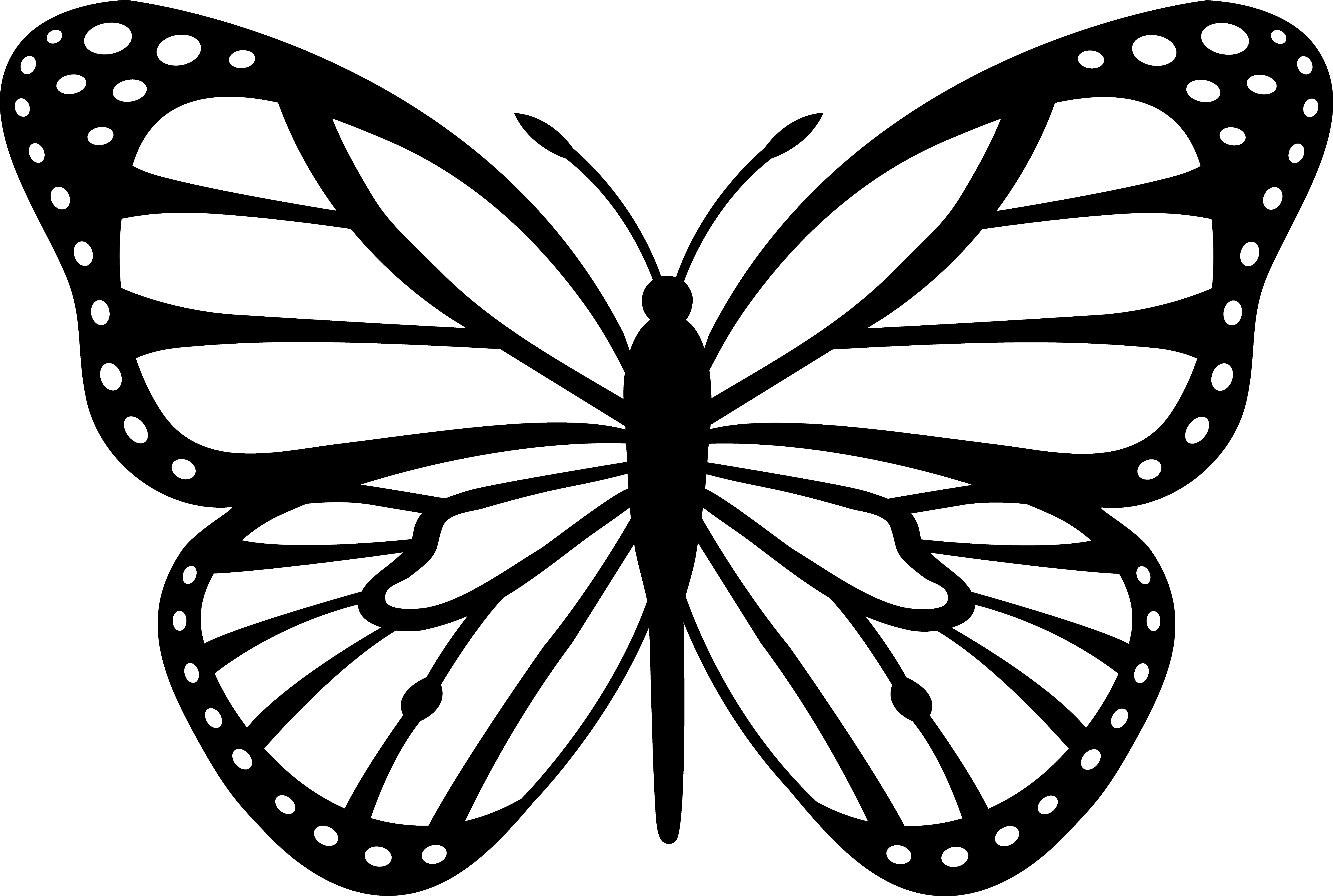 butterfly drawing outline at getdrawings com free for personal use rh getdrawings com Dragonfly Clip Art Black and White White Butterfly Clipart