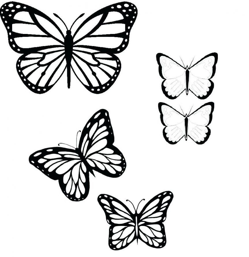 Butterfly Drawing Outline At Getdrawings Com