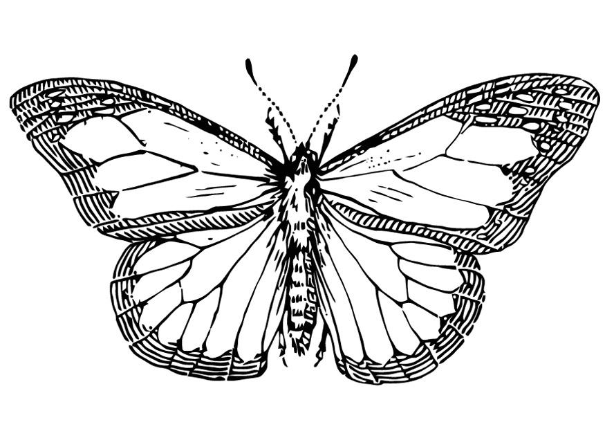 Butterfly Drawing Pics at GetDrawings.com | Free for personal use ...