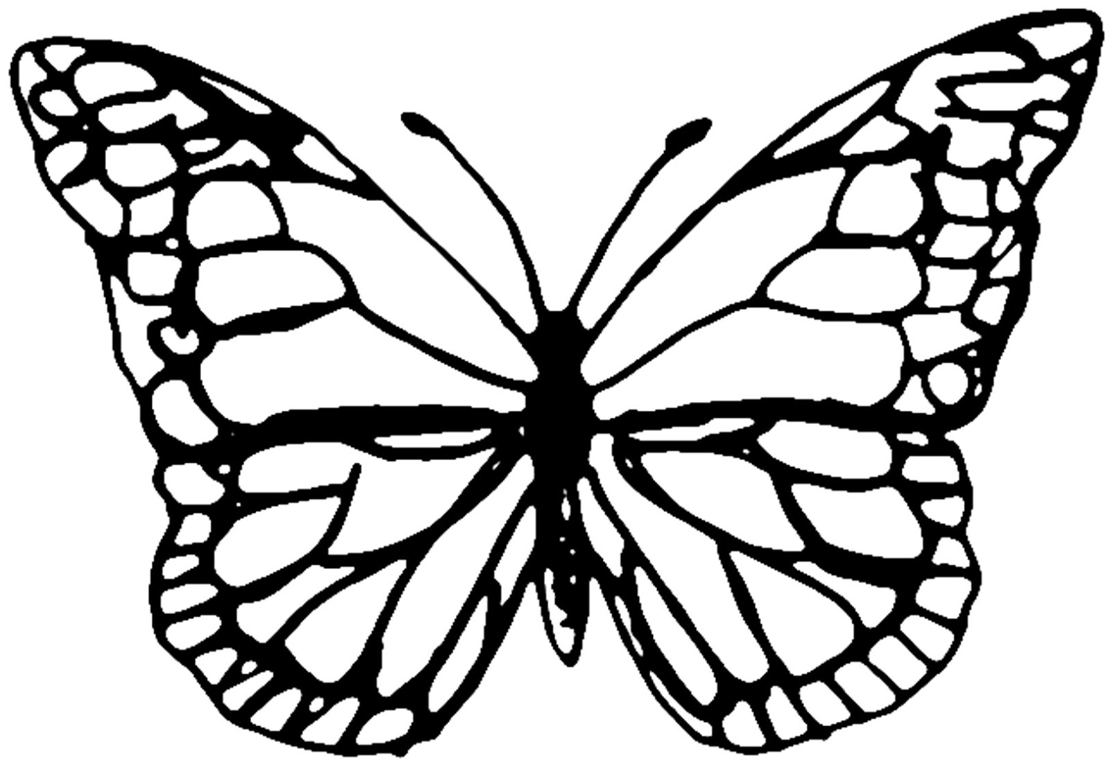 photograph about Butterfly Patterns Printable referred to as Butterfly Drawing Template at  Free of charge for
