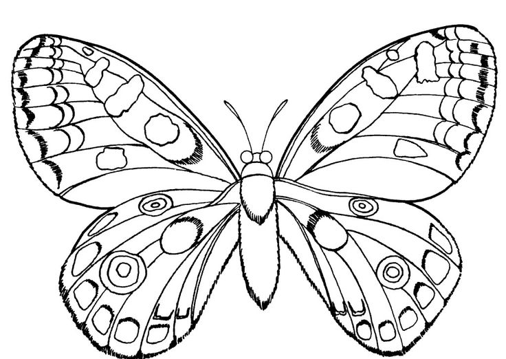 Butterfly Drawing To Print