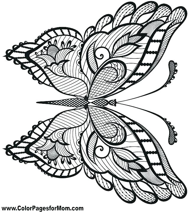640x715 Detailed Butterfly Coloring Pages Large Selection Of Free