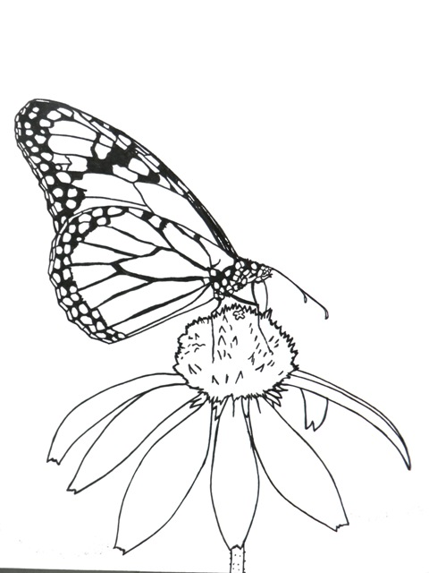 480x640 Good Monarch Butterfly Coloring Pages 44 With Additional Image