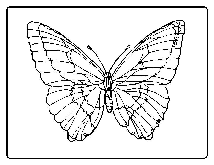 869x671 Butterfly Coloring Pages Coloring Page For Kids Kids Coloring
