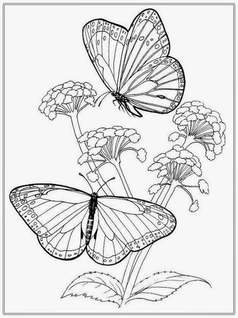 768x1024 Butterfly And Flower Coloring Pages For Adults Preschool Humorous